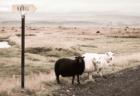 牡牛座(おうし座)の性質と魅力を引き出すアロマ