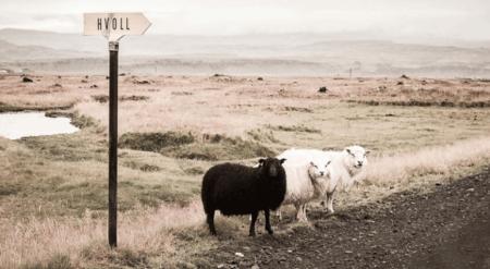牡羊座(おひつじ座)の性質と魅力を引き出すアロマ